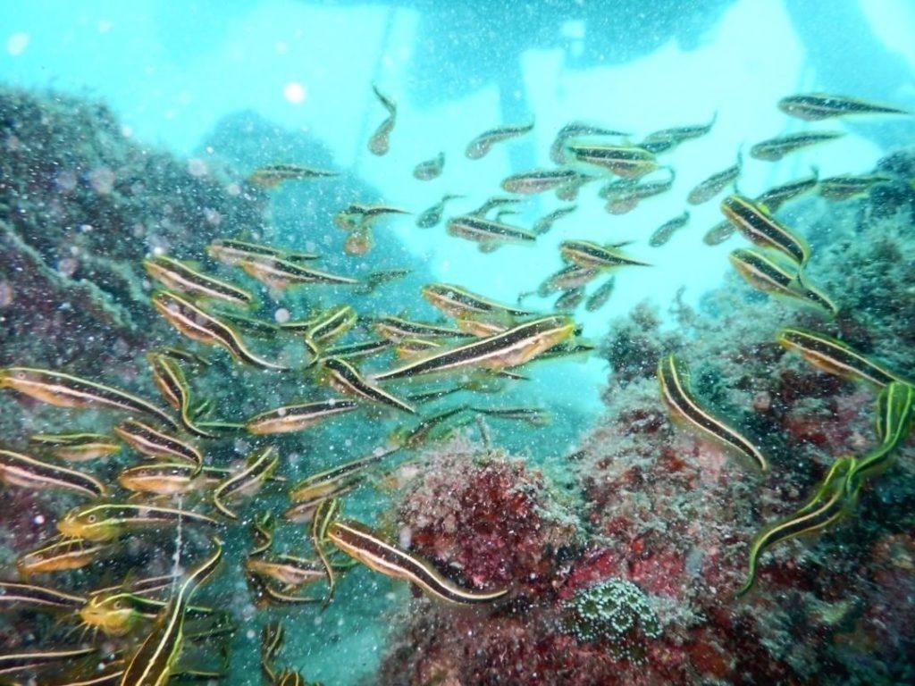 石垣島のダイビング