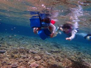 石垣島、青の洞窟シュノーケリング、子供連れ