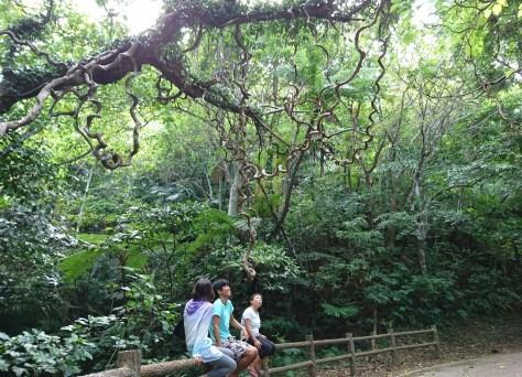 石垣島 森林浴