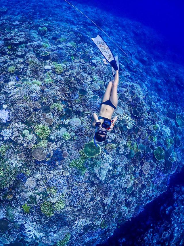 石垣島,スキンダイビング,アクティビティ,サンゴ礁