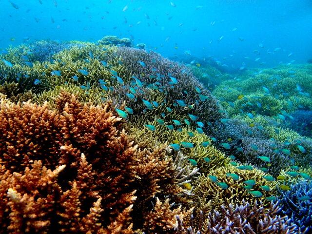 シュノーケリング,カラフル珊瑚