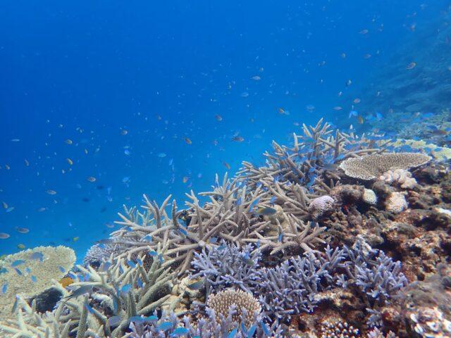 八重干瀬 海の中 サンゴ 魚