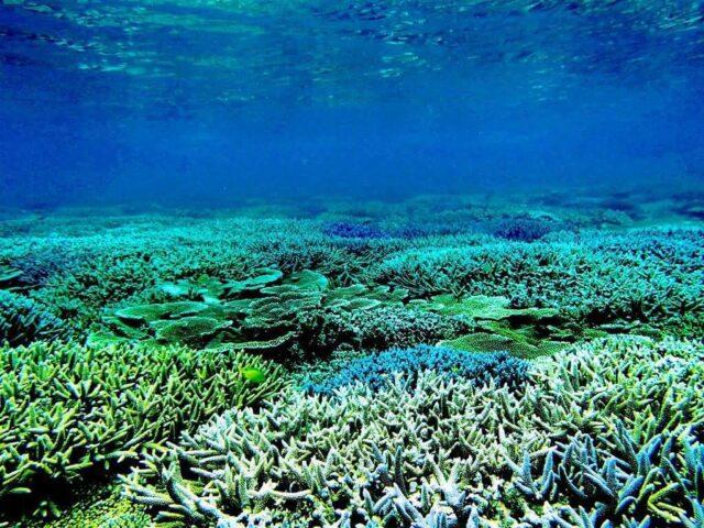 伊良部島 青の洞窟 サンゴ