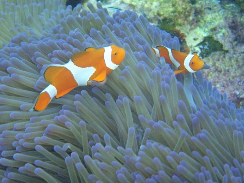 【石垣島】日本最大のサンゴ礁域!白保でカヤック&シュノーケリングツアー(No.521)